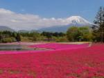 富士山芝桜景色