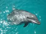 パラオ、ドルフィンズパシフィックのイルカ