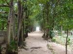 沖縄県国頭郡本部町備瀬のフクギ並木