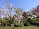 清水寺の西門横の池の桜