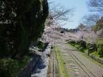 桜の季節の南禅寺前の疎水とトロッコ線路跡
