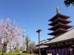 浅草寺からみたスカイツリー、東京都台東区浅草