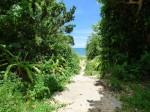 伊原間海岸へ続く道、石垣島