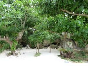 ホテルオリオンモトブリゾート&スパの琉球庭園の木々