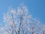 箱根の樹氷