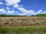 石垣島、野原付近の牧草地