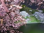 東京千鳥ヶ淵の夜桜1(Cherry blossom at Chidorigafuchi Tokyo, Tokyo)