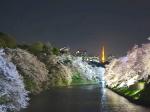 東京千鳥ヶ淵の夜桜3(Cherry blossom at Chidorigafuchi Tokyo, Tokyo)