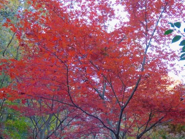 廣澤寺温泉横の紅葉