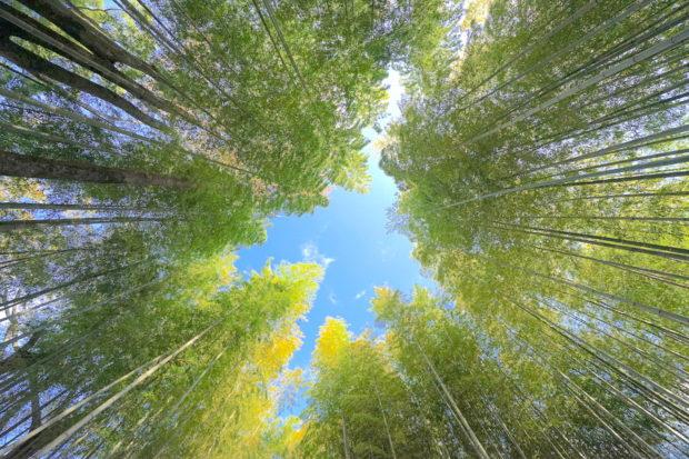 修善寺の竹の小径